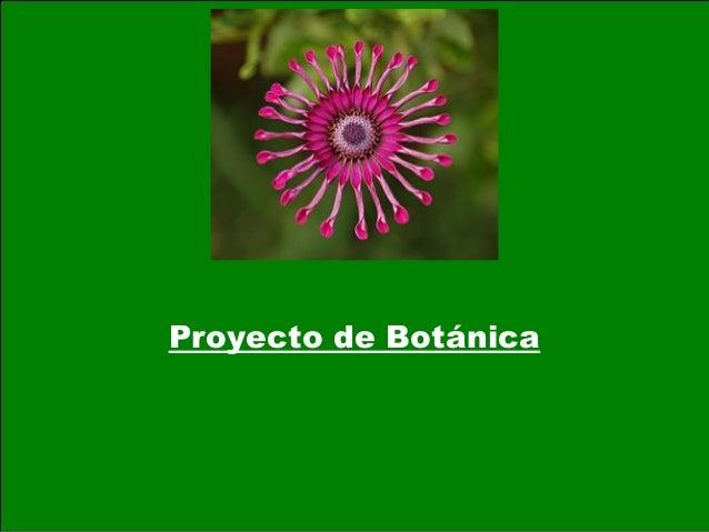 Proyecto de Botánica