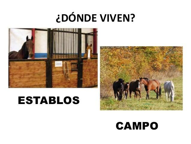 Proyecto caballos - Donde viven los acaros ...