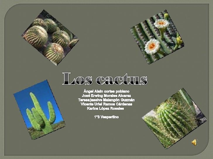 Proyecto Cactus 1°3vesp