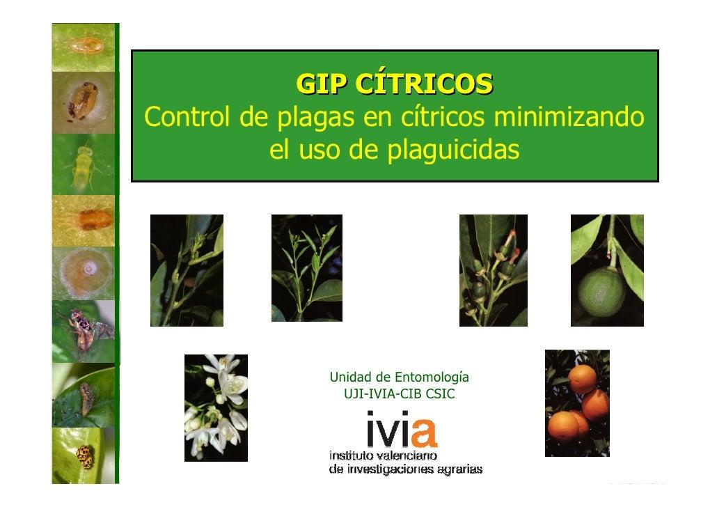 GIP CÍTRICOSControl de plagas en cítricos minimizando          el uso de plaguicidas               Unidad de Entomología  ...