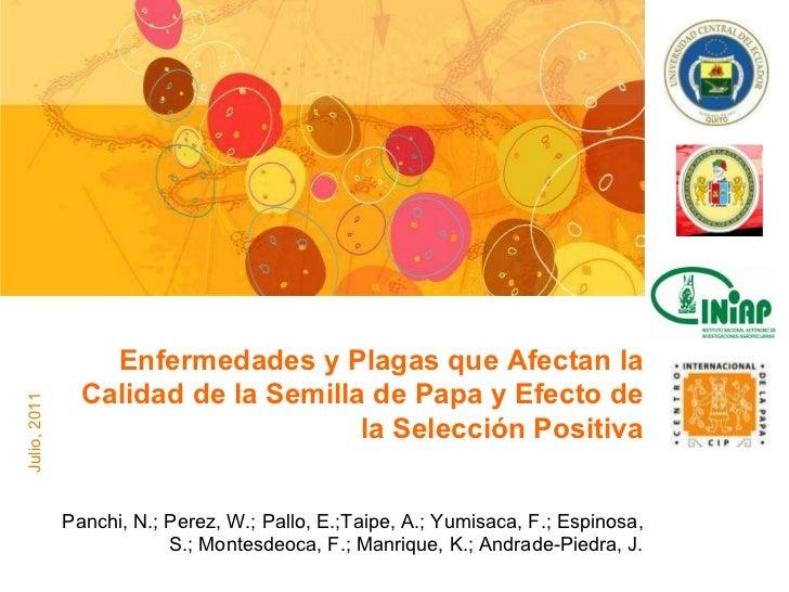 Panchi, N.; Perez, W.; Pallo, E.;Taipe, A.; Yumisaca, F.; Espinosa, S.; Montesdeoca, F.; Manrique, K.; Andrade-Piedra, J. ...