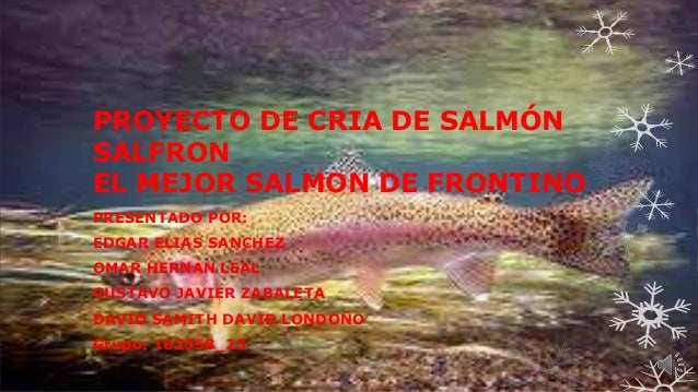 PROYECTO DE CRIA DE SALMÓN SALFRON EL MEJOR SALMON DE FRONTINO PRESENTADO POR: EDGAR ELIAS SANCHEZ OMAR HERNAN LEAL GUSTAV...