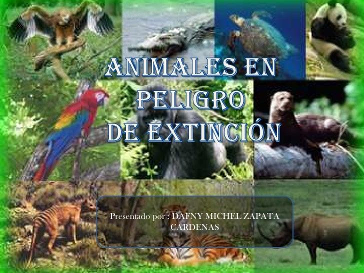 Animales en peligro<br /> de Extinción<br />Presentado por : DAFNY MICHEL ZAPATA CARDENAS <br />
