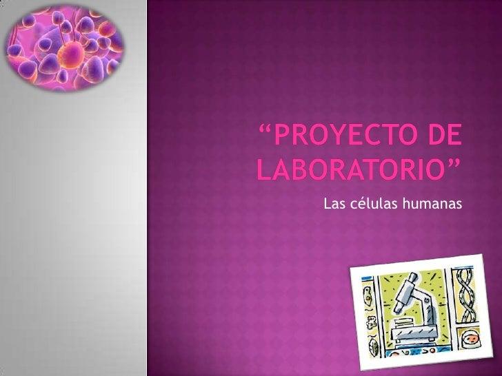 """""""PROYECTO DE LABORATORIO""""<br />Las células humanas<br />"""