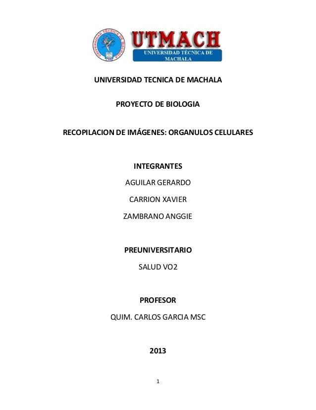 1 UNIVERSIDAD TECNICA DE MACHALA PROYECTO DE BIOLOGIA RECOPILACION DE IMÁGENES: ORGANULOS CELULARES INTEGRANTES AGUILAR GE...