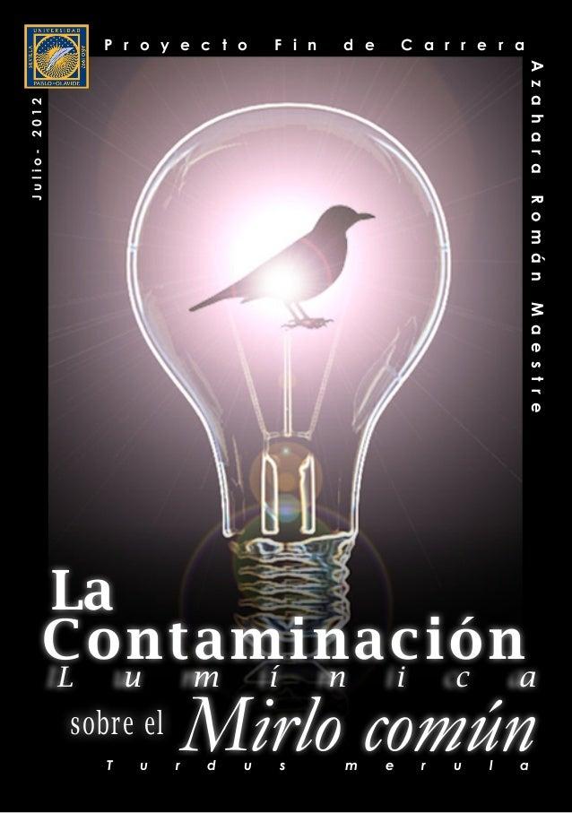 A z a h a r a R o m á n M a e s t r e 1 Contaminación sobre el Mirlo común La L u m í n i c a T u r d u s m e r u l a P r ...