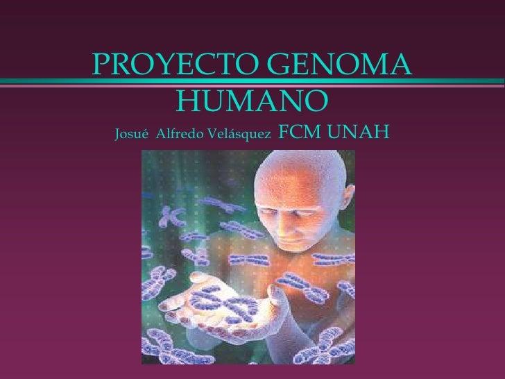 PROYECTO GENOMA HUMANO Josué  Alfredo Velásquez  FCM UNAH<br />