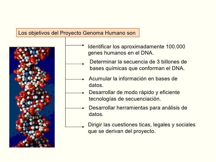 Proyecto genoma humano for En 2003 se completo la secuenciacion del humano