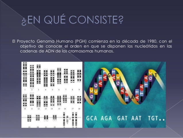 Proyecto genoma for En 2003 se completo la secuenciacion del humano