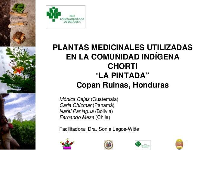 """PLANTAS MEDICINALES UTILIZADAS   EN LA COMUNIDAD INDÍGENA             CHORTI          """"LA PINTADA""""     Copan Ruinas, Hondu..."""