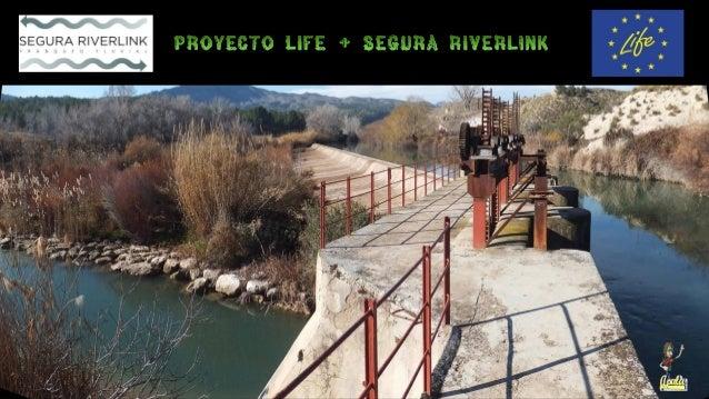 Proyecto Life+ Segura Riverlink • Las presas y azudes constituyen barreras físicas para los movimientos naturales de los p...
