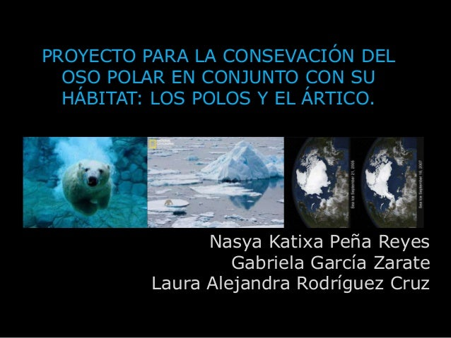 Proyecto para la consevación del oso polar