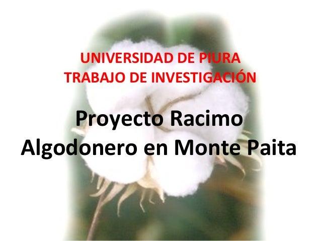 UNIVERSIDAD DE PIURA TRABAJO DE INVESTIGACIÓN Proyecto Racimo Algodonero en Monte Paita