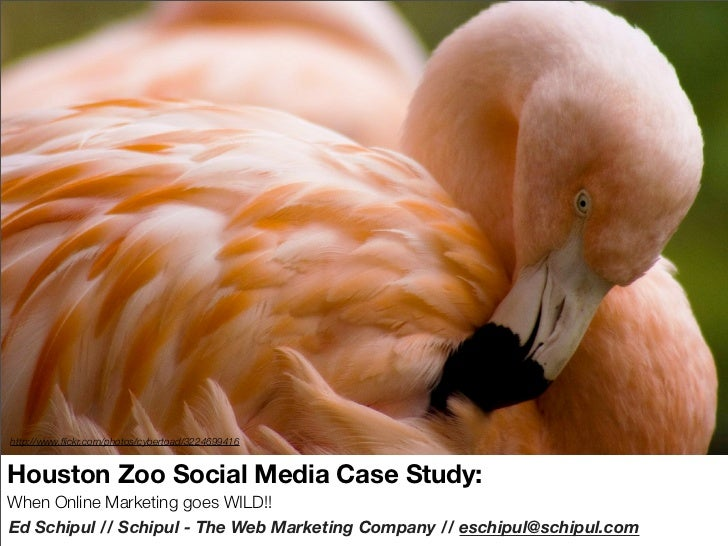 Social Media in action with the Houston Zoo