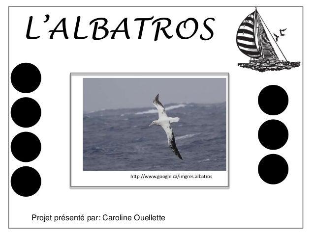 L'ALBATROS                            http://www.google.ca/imgres.albatrosProjet présenté par: Caroline Ouellette