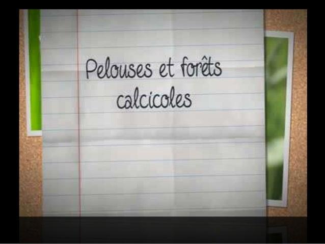 Site NATURA 2000Pelouses et forêts calcicoles de la Côte et  arrière Côte de Beaune (FR 2600973)   Second comité de Pilota...