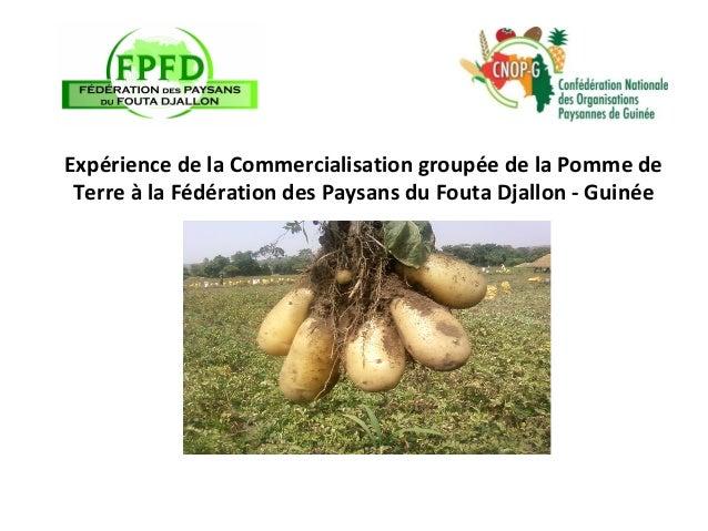 Expérience de la Commercialisation groupée de la Pomme de Terre à la Fédération des Paysans du Fouta Djallon - Guinée