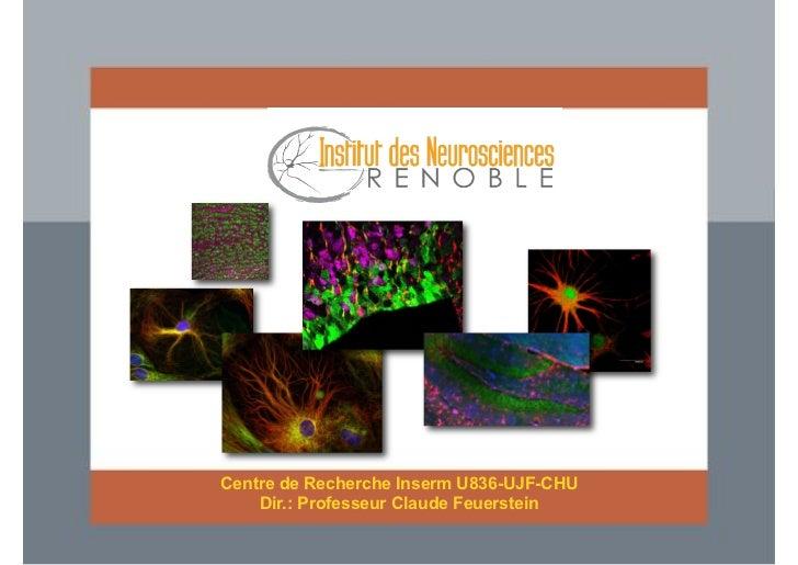 Centre de Recherche Inserm U836-UJF-CHU    Dir.: Professeur Claude Feuerstein
