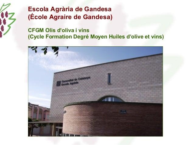Escola Agrària de Gandesa  (École Agraire de Gandesa)  CFGM Olis d'oliva i vins  (Cycle Formation Degré Moyen Huiles d'oli...