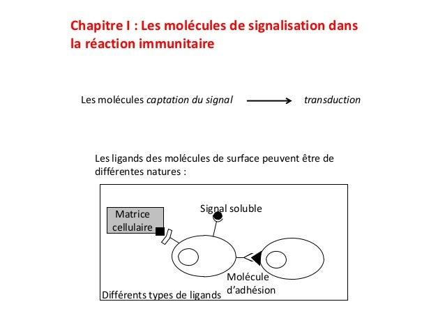 Chapitre I : Les molécules de signalisation dansla réaction immunitaire Les molécules captation du signal               tr...