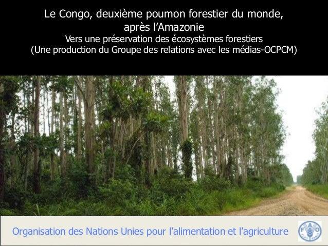 Le Congo, deuxième poumon forestier du monde,                      après l'Amazonie            Vers une préservation des é...