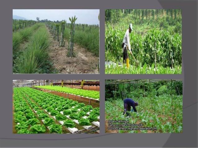 Farm Malaysia Farming Made Malaysia to