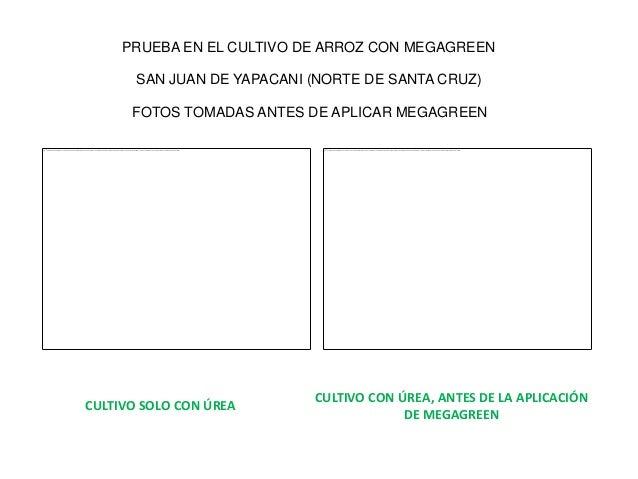 Resultados satisfactorios de Megareen en Bolivia