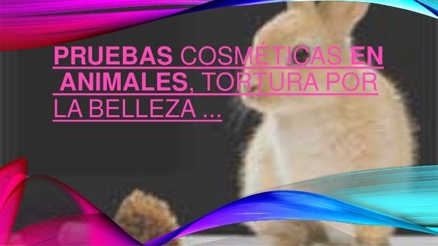 PRUEBAS COSMÉTICAS EN ANIMALES, TORTURA POR LA BELLEZA ...