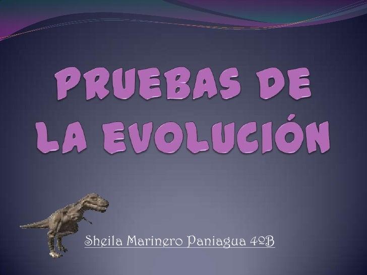 Pruebas de la evolución<br />Sheila Marinero Paniagua 4ºB <br />