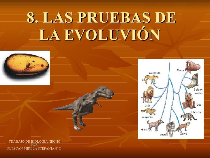 8. LAS PRUEBAS DE LA EVOLUVIÓN  TRABAJO DE BIOLOGÍA HECHO POR  PLESCAN MIRELA STEFANIA 4º C