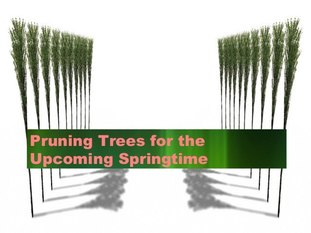 Pruning trees for the upcoming springtime