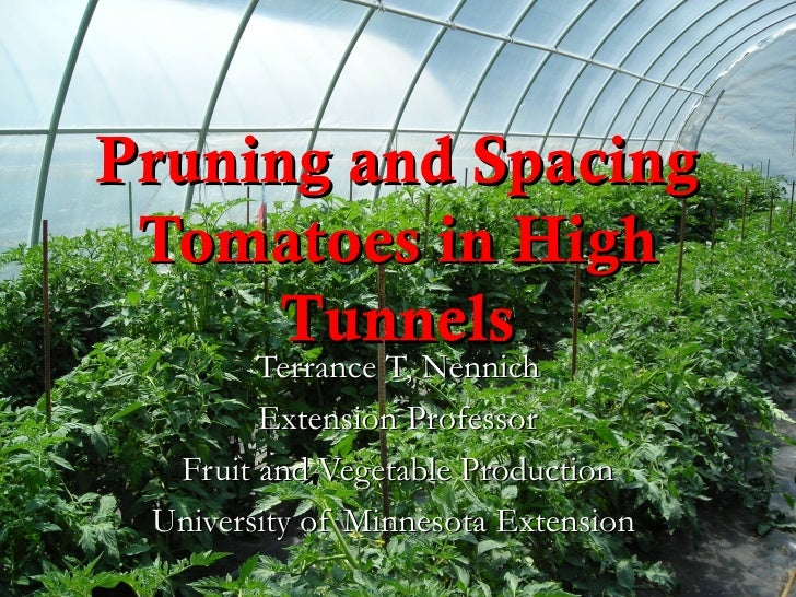 Pruning and Spacing Tomatoes in High      Tunnels        Terrance T, Nennich        Extension Professor  Fruit and Vegetab...