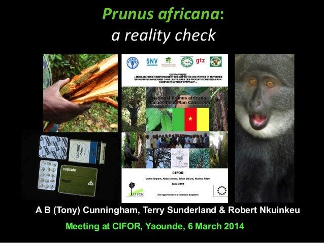 Prunus  africana:     a  reality  check  A B (Tony) Cunningham, Terry Sunderland & Robert Nkuinkeu  Meeting at ...