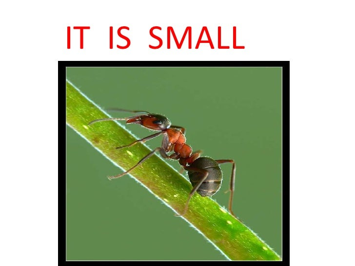 IT  IS  SMALL<br />