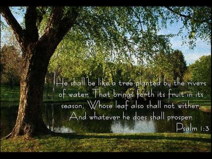 Psalm 1 17th July 2011