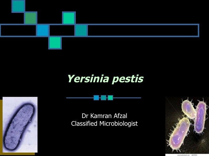 Pseudo+Yersinia+Plague