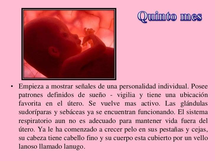 Embarazo y desarrollo pre natal for Cuarto quinto y sexto mes de embarazo
