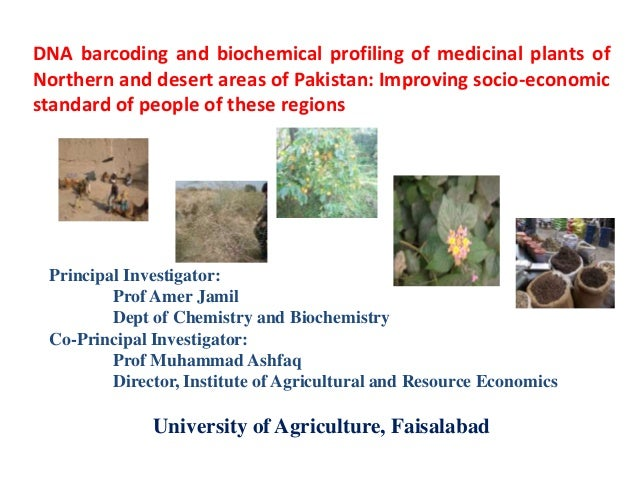 DNA Barcoding and Biochemical Profiling of Medicinal Plants of Northern and Desert Areas of Pakistan: Improving Socio-economic Standard of the People of these Regions by Dr. Amer Jamil, University of Agriculture, Faisalabad