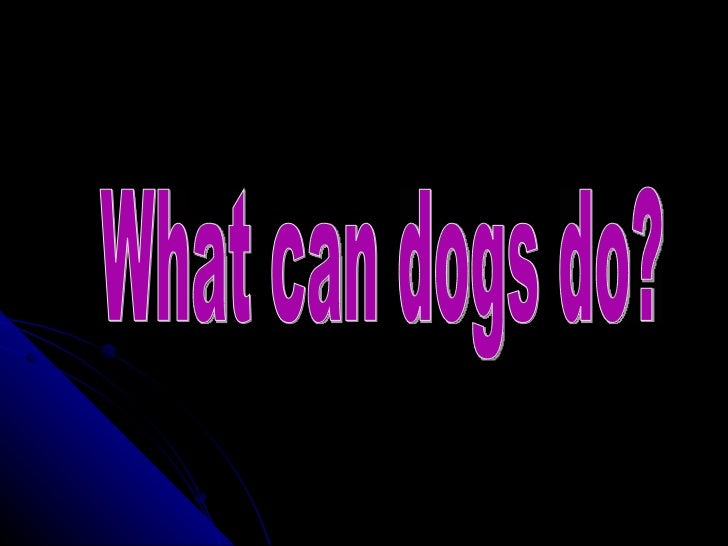 What can dogs do?