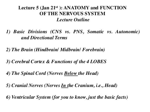 Lecture 5 (Jan 21st ): ANATOMY and FUNCTION	  OF THE NERVOUS SYSTEM	  Lecture Outline	  	  1) Basic Divisions (CNS vs. PNS...