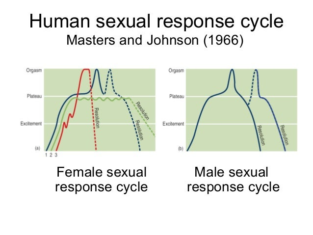 Sexual Response Cycle Psychology Definition