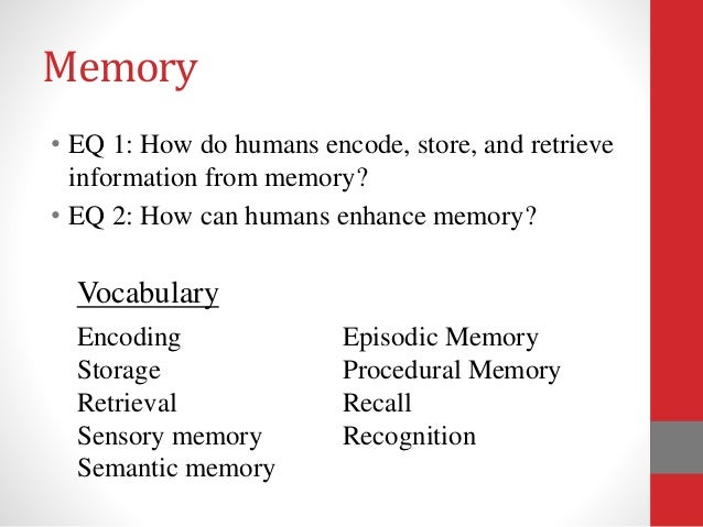 storing and retrieving information 2 essay