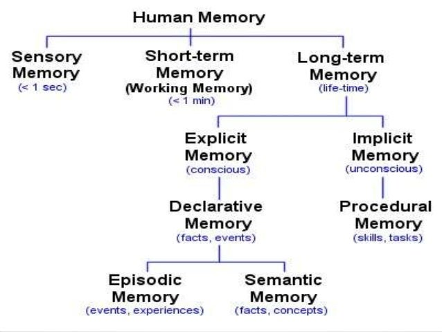 the human memory model What's more, memory is malleable–and it tends to decay with age we can divide the human mind into four domains of informational interface: 1).