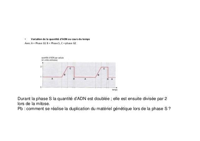 • Varia0on  de  la  quan0té  d'ADN  au  cours  du  temps     Avec  A  =  Phase  G1  B  =...