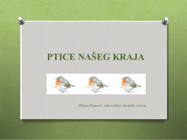 PTICE NAŠEG KRAJA     Biljana Popović, rukovodilac ekološke sekcije