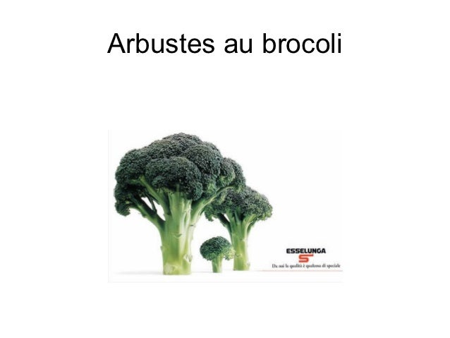 Arbustes au brocoli