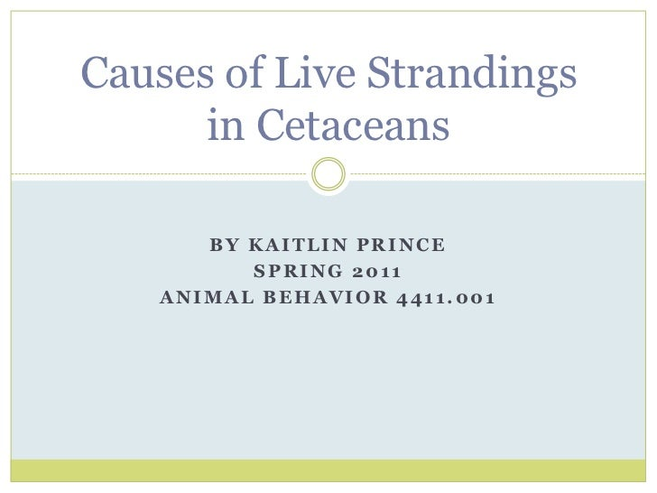 By Kaitlin Prince<br />Spring 2011<br />Animal Behavior 4411.001<br />Causes of Live Strandings in Cetaceans<br />