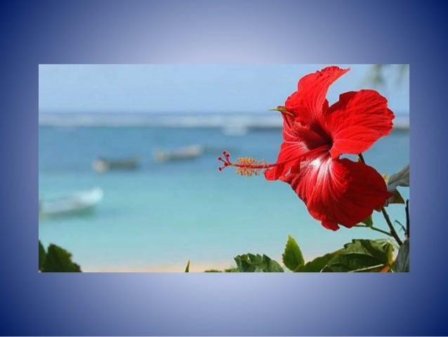 Puerto Rico Beauty