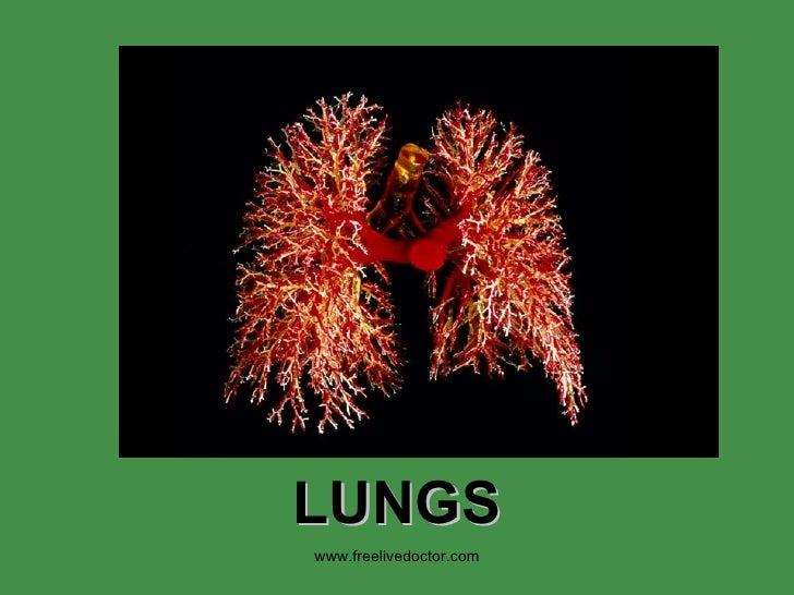 LUNGS www.freelivedoctor.com