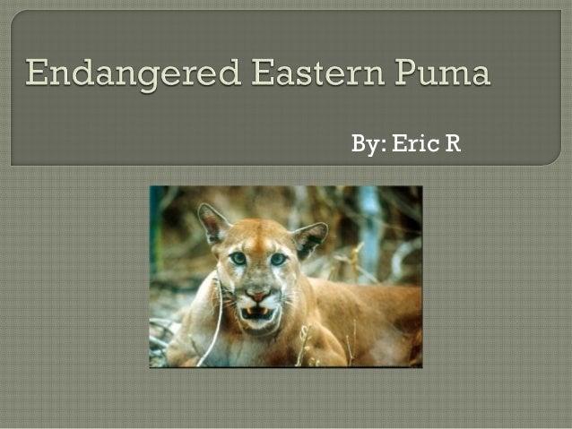 Puma eric